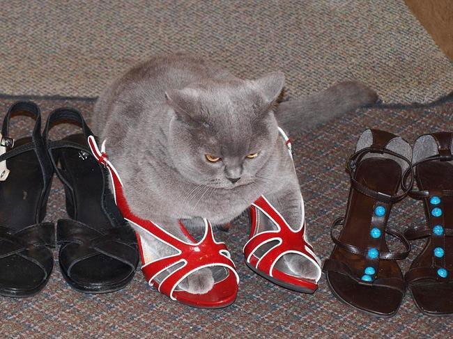 gato-ropa-moda11