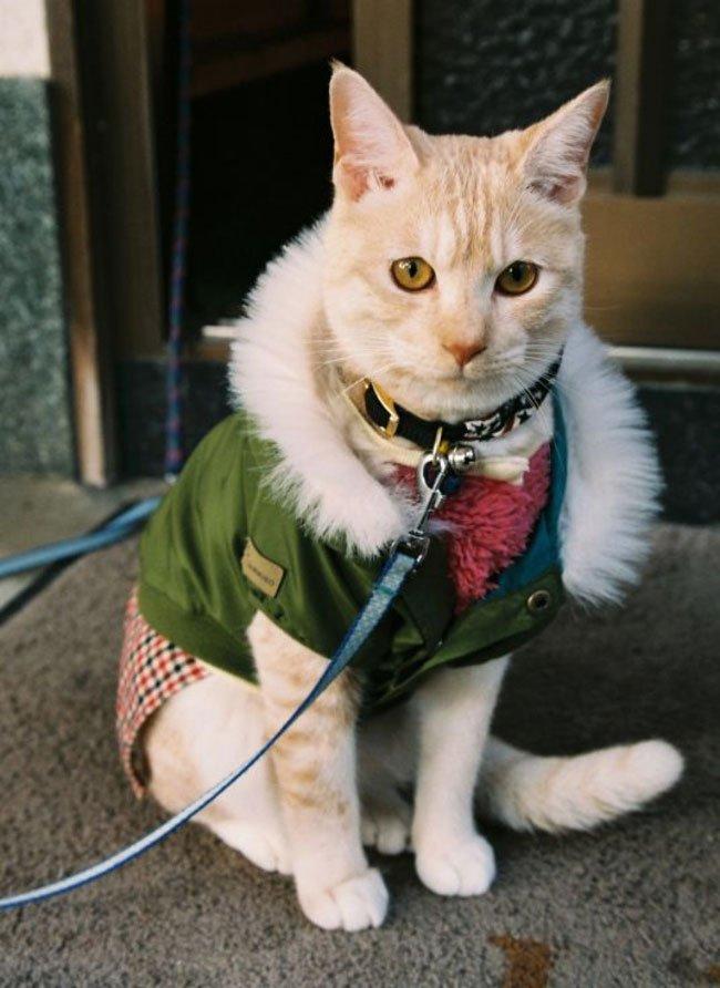 gato-ropa-moda12
