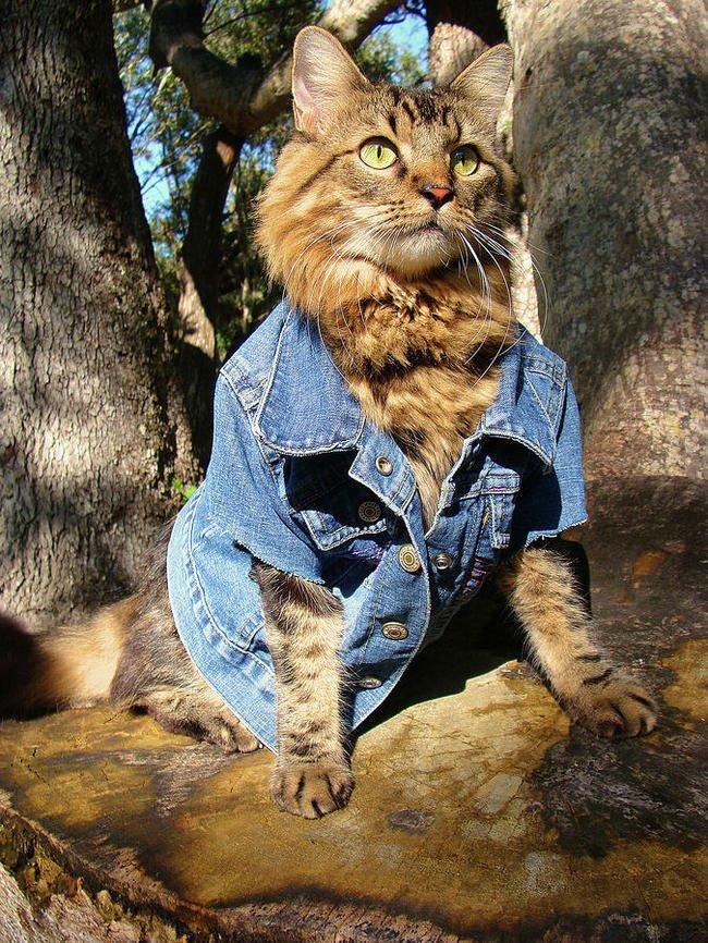 gato-ropa-moda13