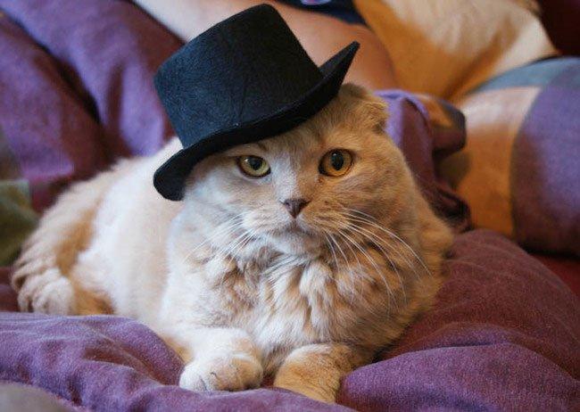 gato-ropa-moda14