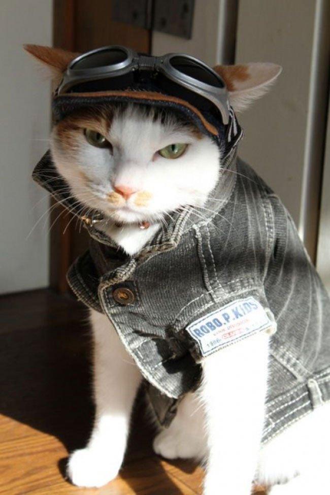 gato-ropa-moda15