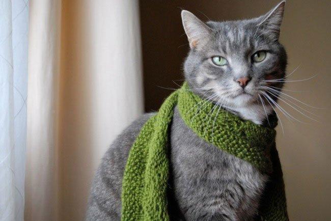 gato-ropa-moda16