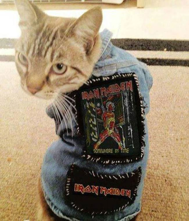 gato-ropa-moda18