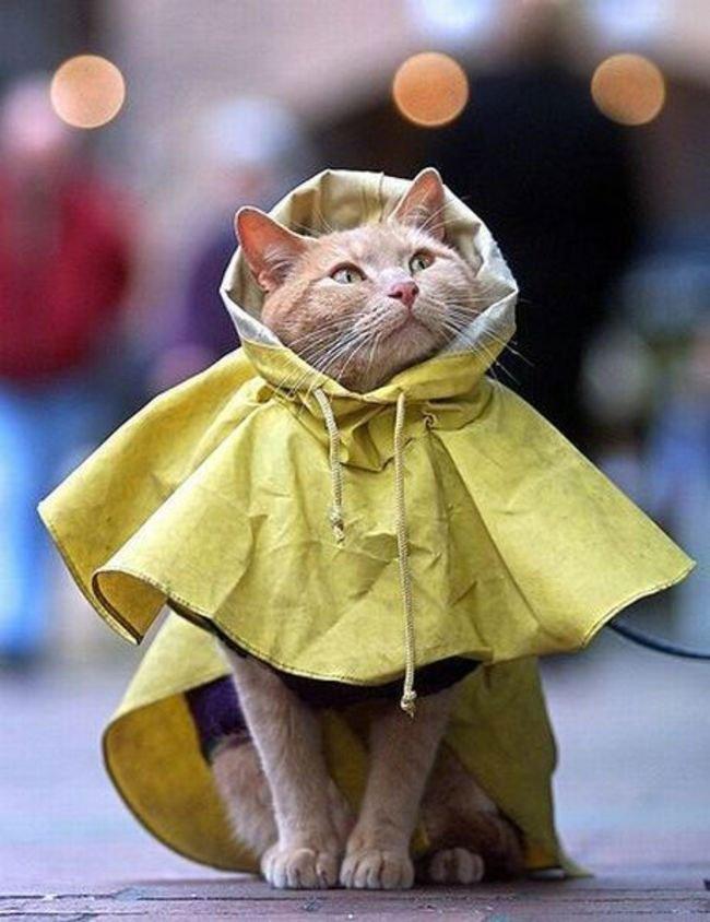 gato-ropa-moda19