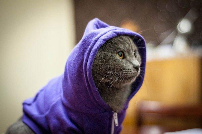 gato-ropa-moda2