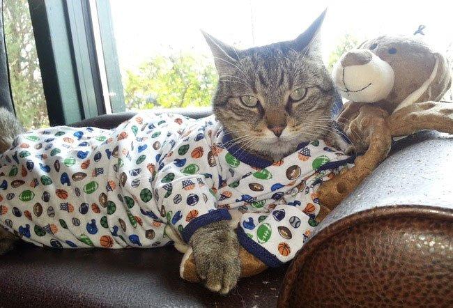 gato-ropa-moda20