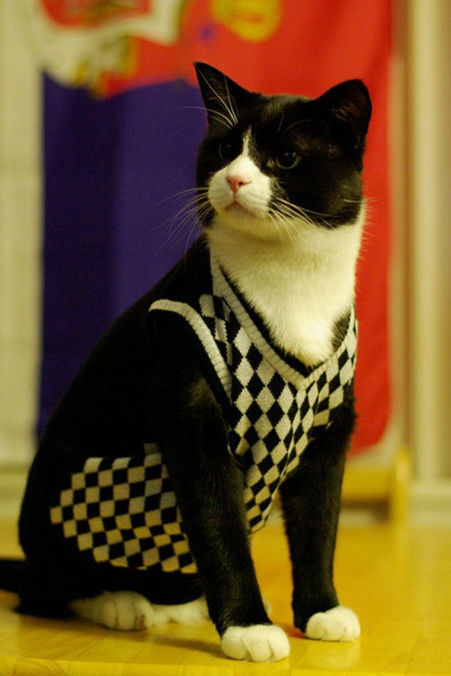 gato-ropa-moda21