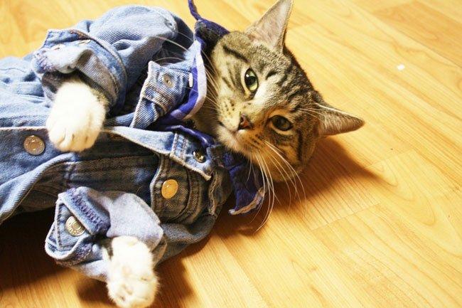 gato-ropa-moda22