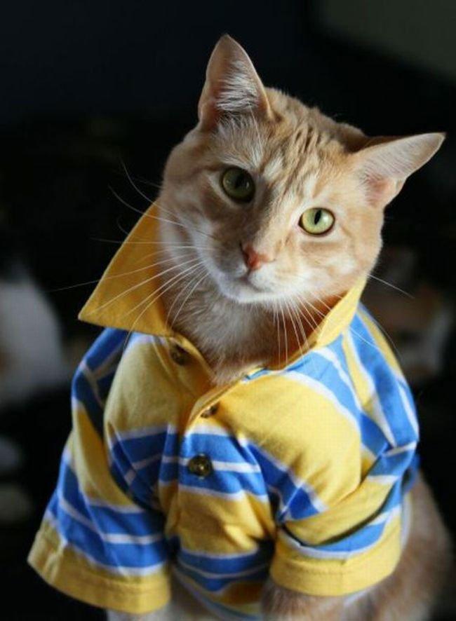 gato-ropa-moda23