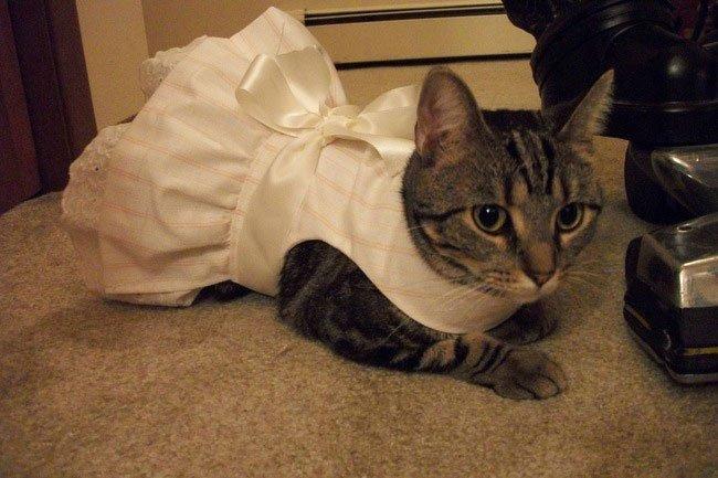 gato-ropa-moda24