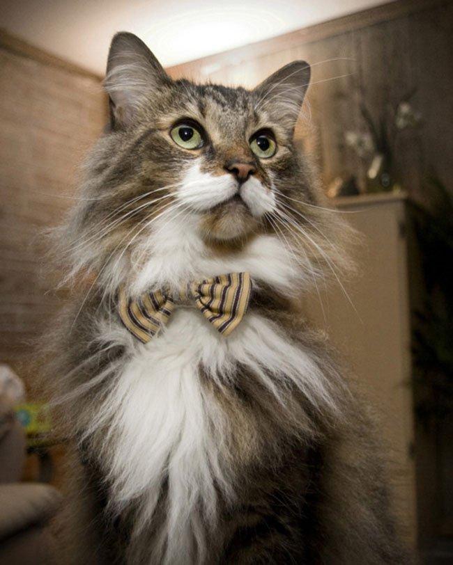 gato-ropa-moda25