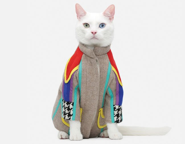 gato-ropa-moda26