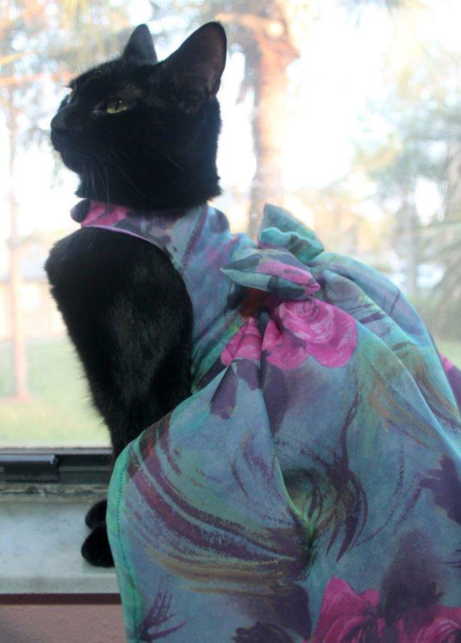 gato-ropa-moda4