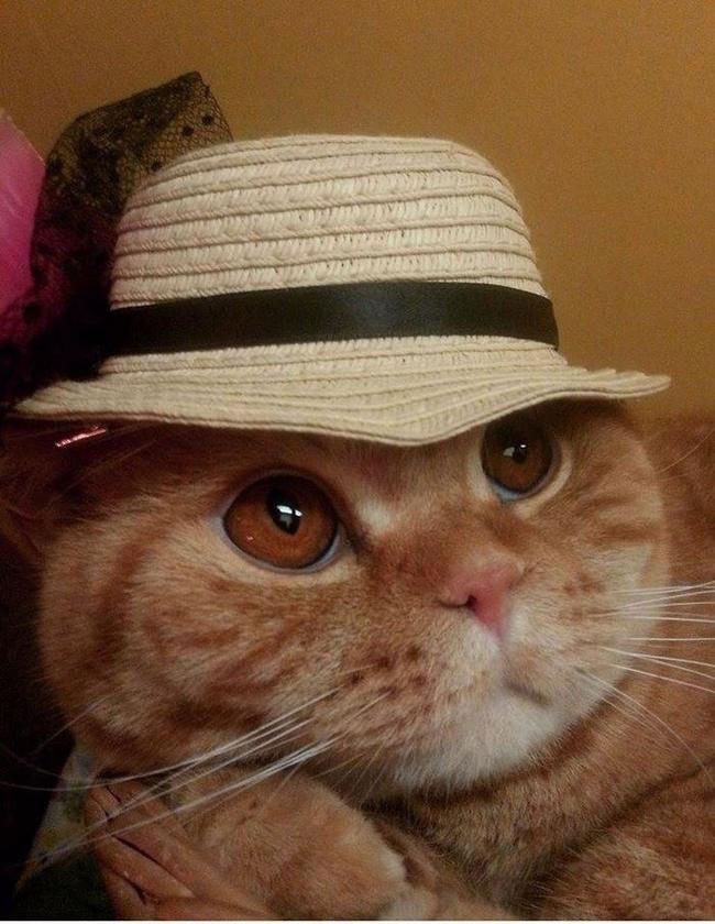 gato-ropa-moda5