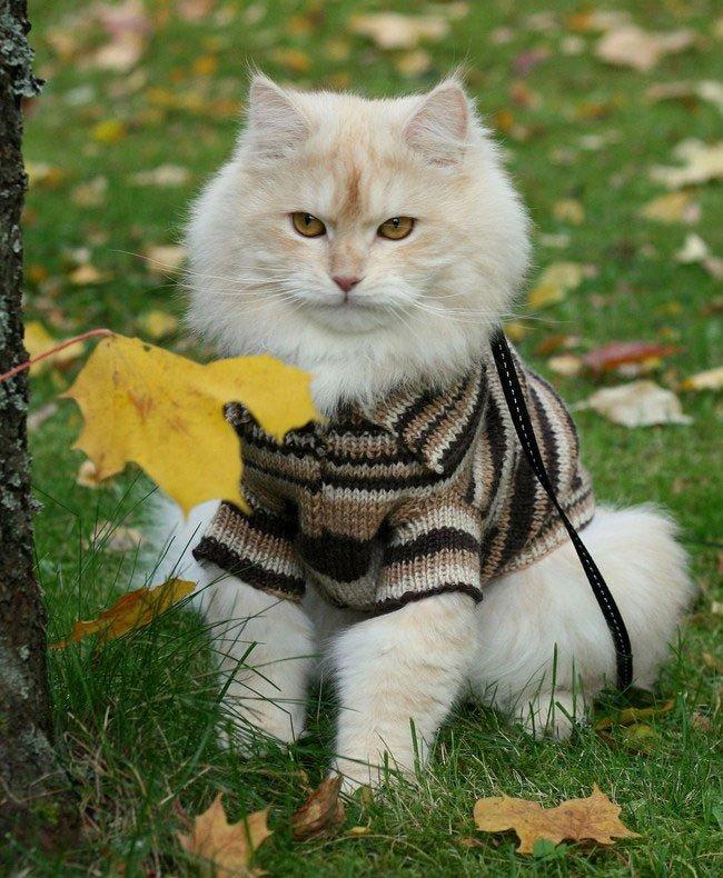 gato-ropa-moda6