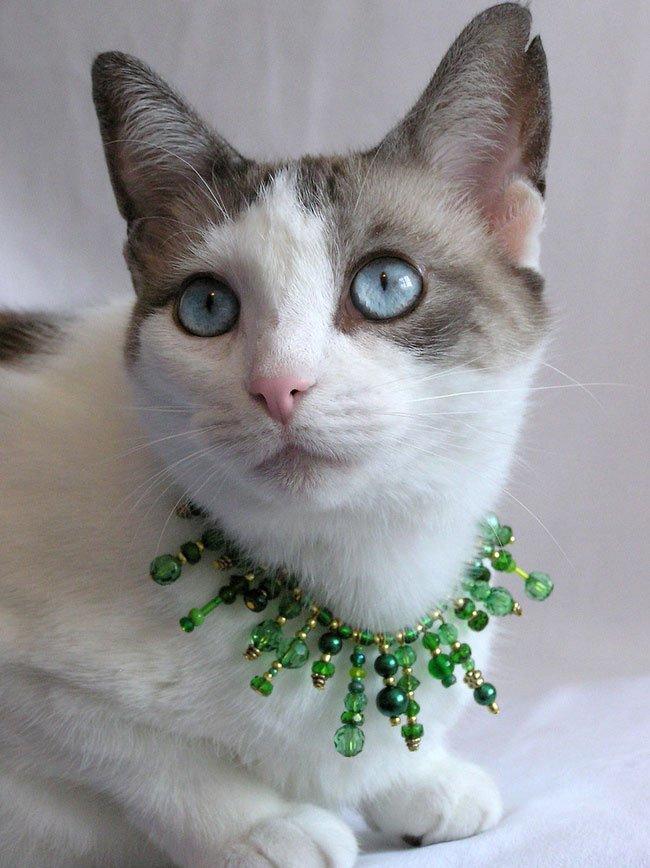gato-ropa-moda7