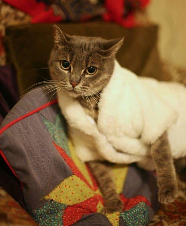 gato-ropa-moda8