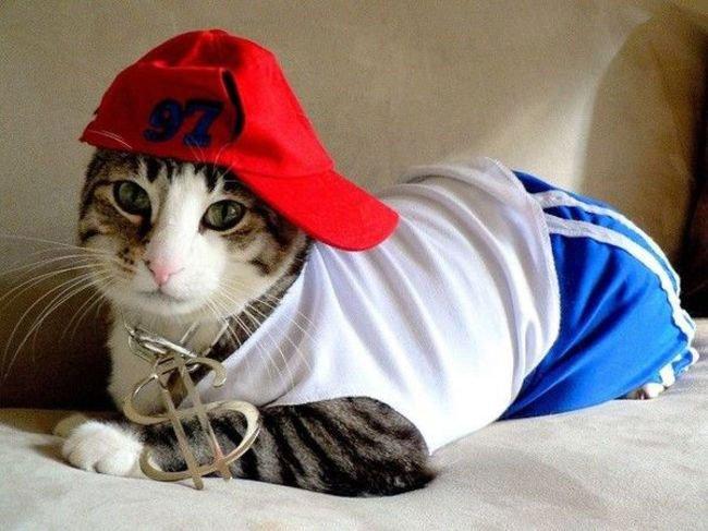 gato-ropa-moda9