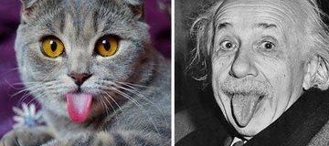 25 Gatos que se cansaron de ser gatos y decidieron parecerse a otras cosas.