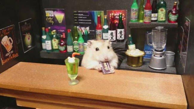 hamster-camarero1