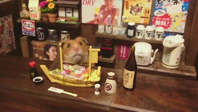 hamster-camarero10