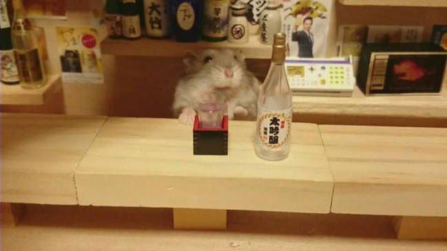 hamster-camarero11