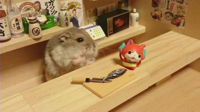 hamster-camarero4