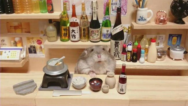 hamster-camarero5
