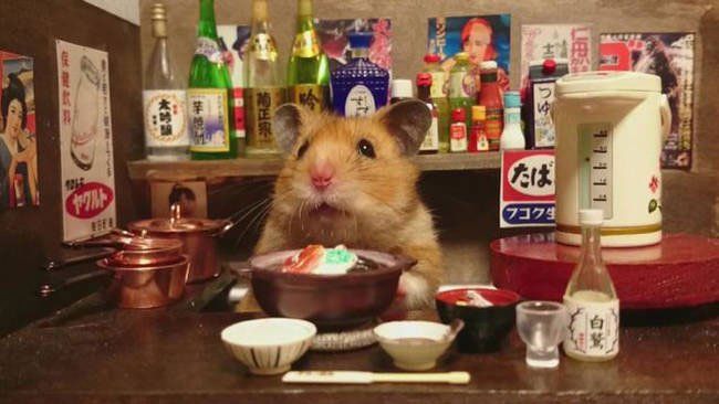 hamster-camarero6