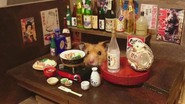 hamster-camarero7