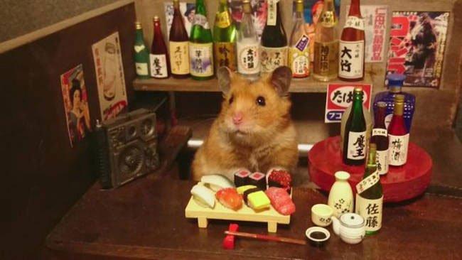 hamster-camarero9