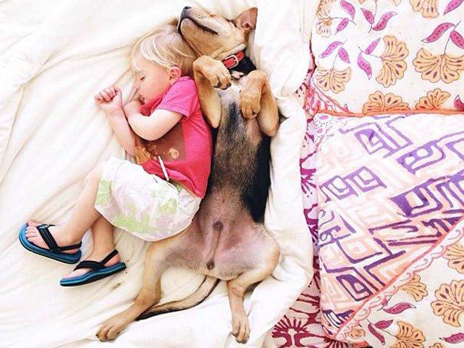 peque-cachorro-durmiendo1