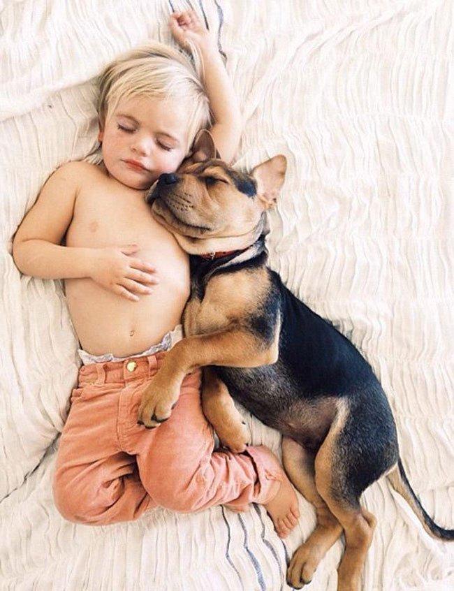 peque-cachorro-durmiendo10