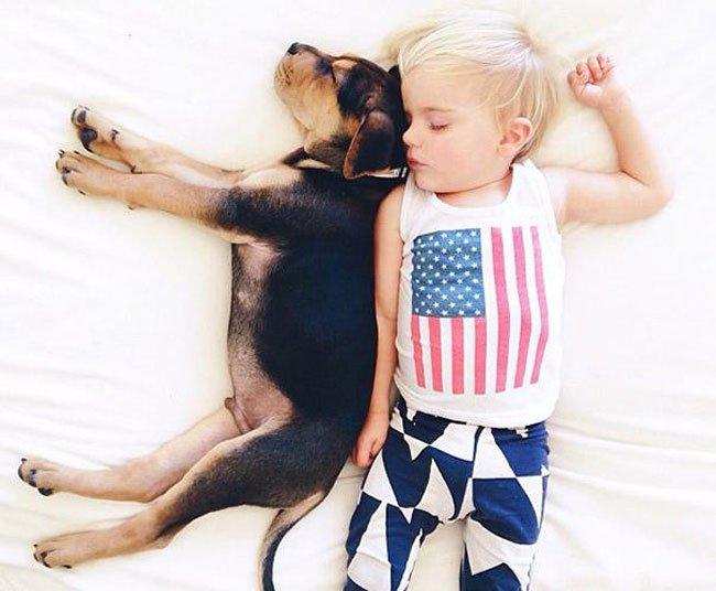 peque-cachorro-durmiendo12