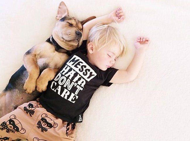 peque-cachorro-durmiendo13