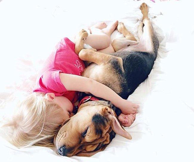 peque-cachorro-durmiendo14