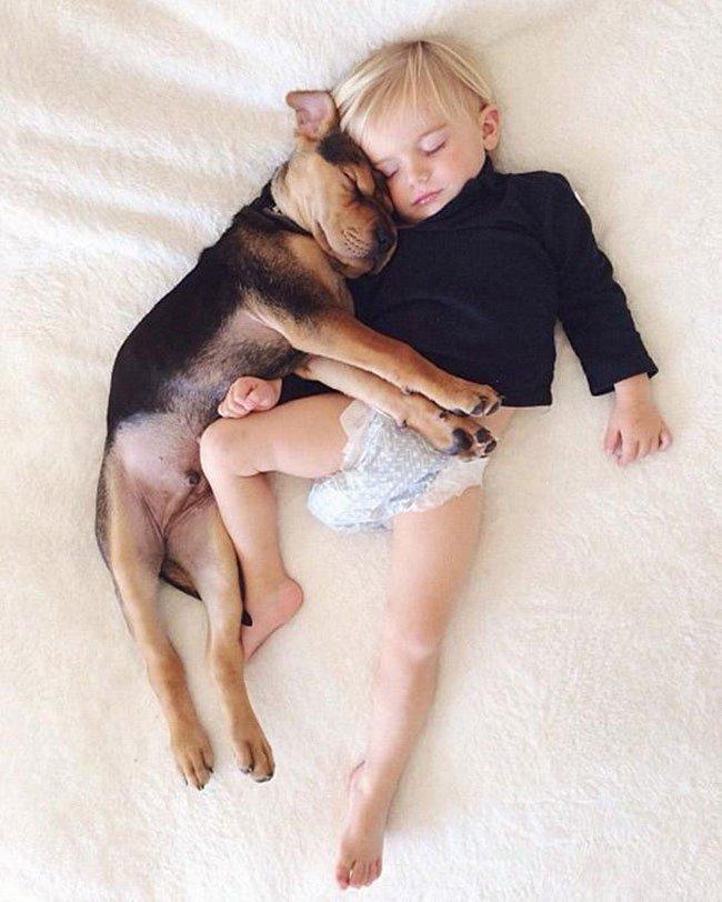 peque-cachorro-durmiendo15