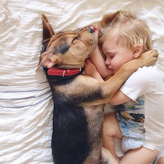 peque-cachorro-durmiendo16