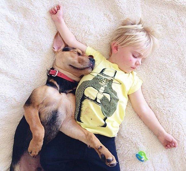 peque-cachorro-durmiendo17