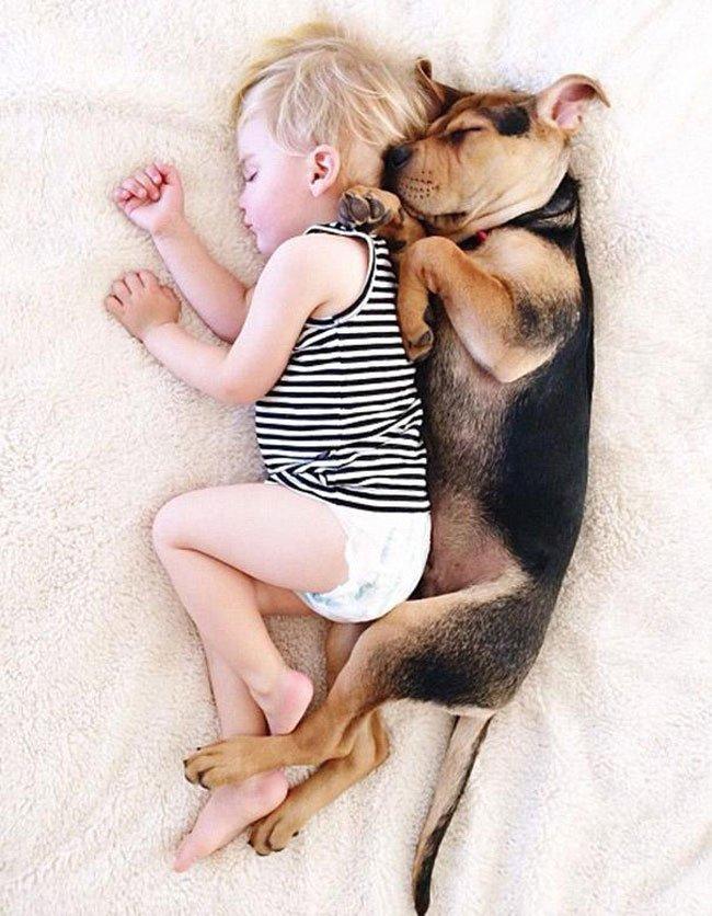 peque-cachorro-durmiendo18