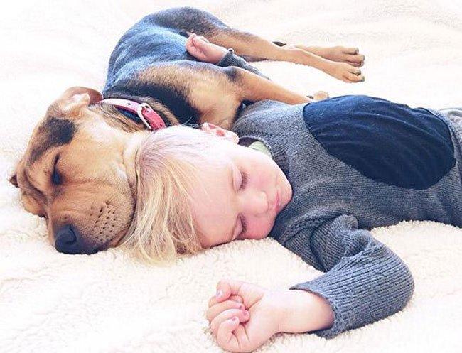 peque-cachorro-durmiendo2