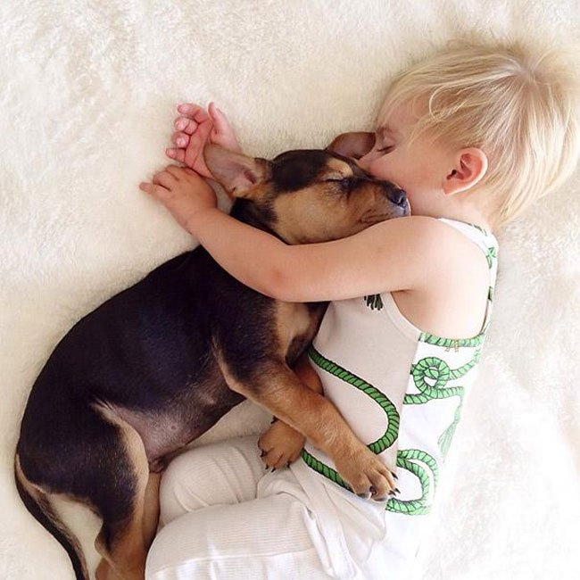 peque-cachorro-durmiendo3