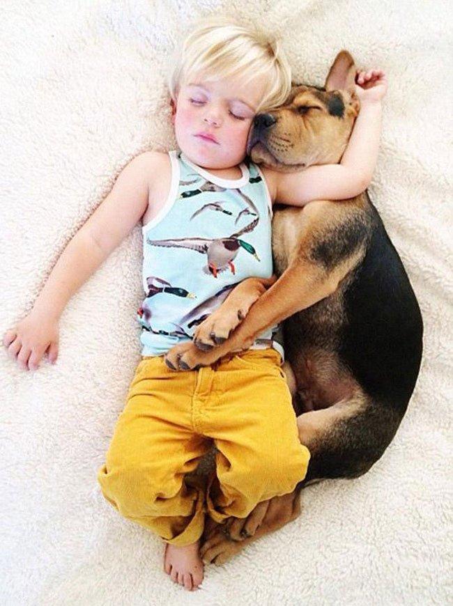 peque-cachorro-durmiendo4