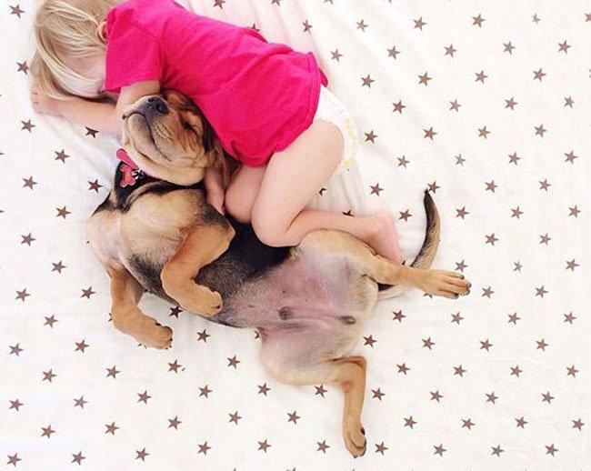 peque-cachorro-durmiendo5
