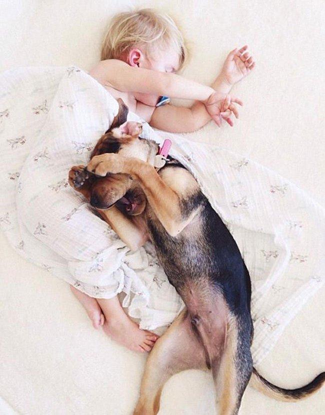 peque-cachorro-durmiendo6