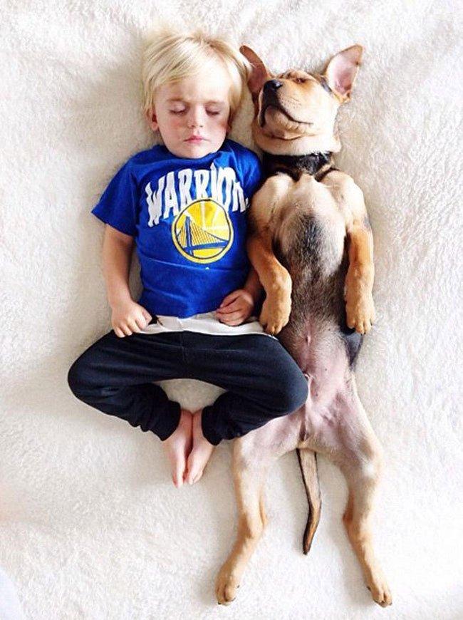 peque-cachorro-durmiendo8