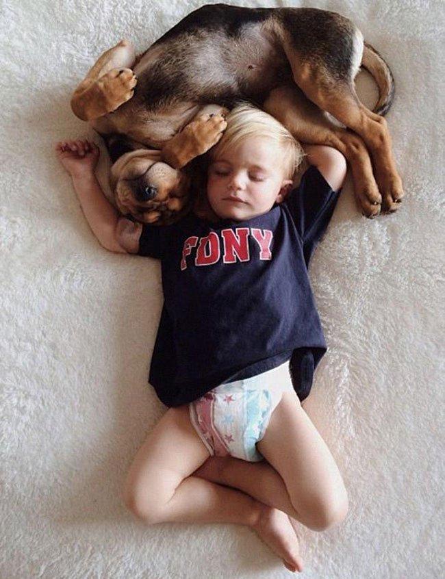peque-cachorro-durmiendo9