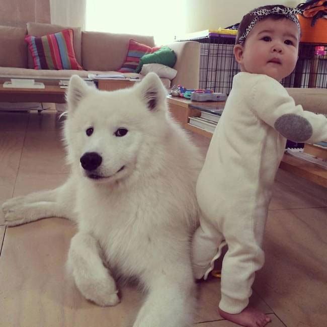 perro-cuidando-bebe11