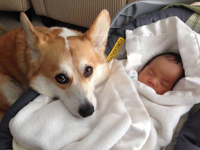 perro-cuidando-bebe12