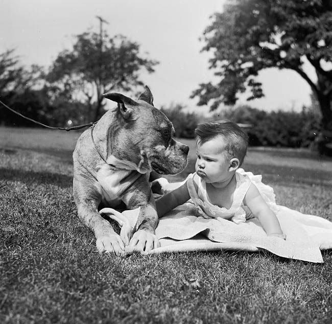 perro-cuidando-bebe14